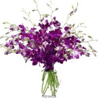 Exotic Purple Dendrobium Orchids
